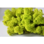 Stabiliseeritud Põdrasamma Raindeer Moss 500g light green