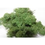 Stabiliseeritud Põdrasamma Raindeer Moss 500g green