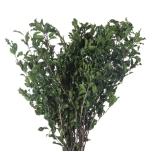 Tenuifolium Vert 30/40