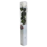 Stabiliseeritud Roos Amorosa Standard Kinkekarbis valge 1tk