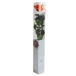 Stabiliseeritud Roos Amorosa Standard Kinkekarbis oranz 1tk