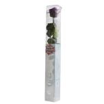 Stabiliseeritud Roos Amorosa Standard Kinkekarbis tumelilla 1tk