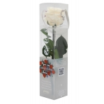 Stabiliseeritud Roos Amorosa Mini Kinkekarbis Champagne 1tk