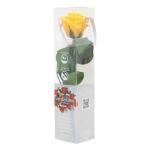Stabiliseeritud Roos Amorosa Mini Kinkekarbis kollane 1tk