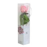 Stabiliseeritud Roos Amorosa Mini Kinkekarbis pastellne Roosa