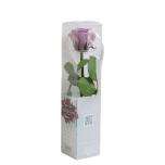 Stabiliseeritud Roos Amorosa Mini Kinkekarbis Lilla 1tk