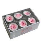 Stabiliseeritud Pargiroosid 6tk pastell roosa/valge