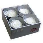 Stabiliseeritud Roos Premium 4tk karbis valge