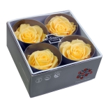 Stabiliseeritud Roos Premium 4tk karbis kollane