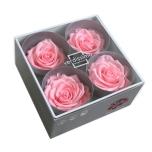 Stabiliseeritud Roos Premium 4tk karbis pastell roosa