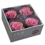 Stabiliseeritud Roos Premium 4tk karbis kirsiõis