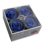 Stabiliseeritud Roos Premium 4tk karbis tumesinine