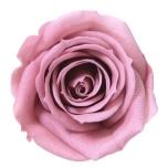 Stabiliseeritud Roos Mini Cherry Blossom 1TK