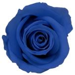 Stabiliseeritud Roos Mini Azul Cielo 1TK