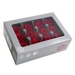 Stabiliseeritu Rosa Mini Burgundy 12tk