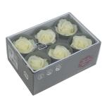 Stabiliseeritud Roos Standard 6tk karbis vanilje