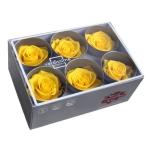 Stabiliseeritud Roos Standard 6tk karbis kollane