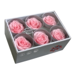 Stabiliseeritud Roos Standard 6tk karbis pastellne roosa