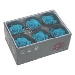 Stabiliseeritud Roos Standard 6tk Bright Turquoise