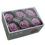 Stabiliseeritud Roos Standard 6tk karbis lilla
