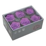 Stabiliseeritud Roos Standard 6tk Bright Lilac
