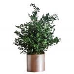 Stabiliseeritud Planta Parvafolia 70Cm Verde