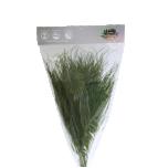 Stabiliseeritud Tiki Vert 40/60 1 pakk