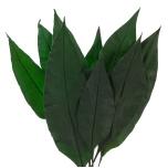 Stabiliseeritud Tropical Leaf 20/30 1 pakk