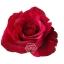 Red-Phanter-cenital.jpg