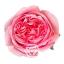 pink-xpression-cenital.jpg