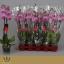 product/img.ozexport.nl/112892-12-LIVE_fotos-0x840A16DF7EFAC4F38CB0D6055C641E8566952469.jpg