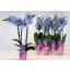 product/img.ozexport.nl/112897-9-LIVE_fotos-0xD9D8287C6A5C34C27306B49698CDAA685EEEBE95.jpg