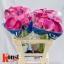 product/img.ozexport.nl/115730-60-LIVE_fotos-0xA426D2825C42F2D2FC026FEA8051562015409031.jpg