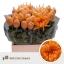 product/img.ozexport.nl/14554-70-LIVE_fotos-0xCDC944926224C12433FACA0A963D82EAD0A8D7C8.jpg