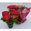 product/img.ozexport.nl/27226-14-LIVE_fotos-0x3B7B25F920F59CBD816D82DA5B42D89FC888D621.jpg