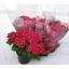 product/img.ozexport.nl/27226-14-LIVE_fotos-0xB14B6D8F9B4020BF9A3C4B4265F02378FC7927E6.jpg