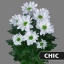 product/img.ozexport.nl/CHRCHI-LIVE_fotos-0xBE2BEE71C1141E002E90B22001076BEFD6622DB8.jpg