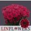 product/img.ozexport.nl/CHRSTRS-LIVE_fotos-0x0B8658FDD27D57BB23B4C868305C730001535093.jpg
