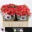 product/img.ozexport.nl/KRSUMD5-LIVE_fotos-0x7E03DE8BF08D134A4D72CE7808EB6AF4B7446560.jpg