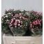 product/img.ozexport.nl/LBOU5MIX-LIVE_fotos-0x0D0D384FC4DEC66F3F97410719519F6205EB3454.jpg