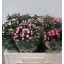 product/img.ozexport.nl/LBOU5MIX-LIVE_fotos-0x710F1029ABF146F12FF3EEDB07D897DE237EDFFB.jpg