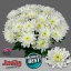 product/img.ozexport.nl/LCHRB-LIVE_fotos-0x9E20F50645B3C9E696B3B9BE38C2FC722DBD8A07.jpg