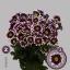 product/img.ozexport.nl/LCHRHA-LIVE_fotos-0x22F66A216A64860D5FE0FE2EBEBD8DE89587F13F.jpg