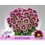 product/img.ozexport.nl/LCHRHA-LIVE_fotos-0x29CDBB95DB2A33A834C3E1B98426809D5B1BFABA.jpg