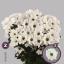 product/img.ozexport.nl/LCHRILO-LIVE_fotos-0xCCDA02AB5696C382BF2F9D383892E95CB467024B.jpg