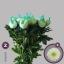 product/img.ozexport.nl/LCHRMA-LIVE_fotos-0x613D668001B58D534C1DB0A38BCCE1DB9CE3D250.jpg