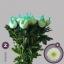 product/img.ozexport.nl/LCHRMA-LIVE_fotos-0x7A45F23B2DCBC664CC82E34D0680073CA6972D90.jpg