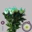 product/img.ozexport.nl/LCHRMA-LIVE_fotos-0xB264F6967587E7286E4640738EDB641FBEC9081E.jpg