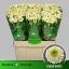 product/img.ozexport.nl/LCHRSANDORW-LIVE_fotos-0x5D34D755CF3F0B18FF58BE365B88554F5704C6C9.jpg
