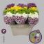 product/img.ozexport.nl/LCHRSANM-LIVE_fotos-0x4503149B626E01345D9CABC3B84E9B54FF519C3D.jpg